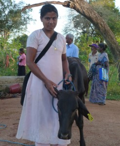 Teri and her cow.