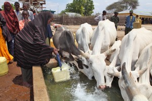 People sharing water source with animals.