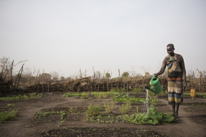 Families learn to grow their own vegetables in South Sudan.