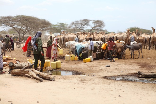 People and animals surround a water point.