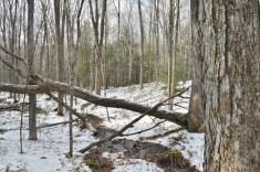 Mass Forest II