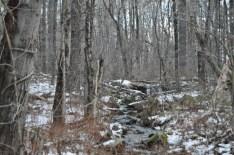 Mass Forest IV