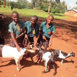 Vocational Training with Goats