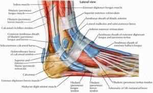 Home Remedies for Foot Tendonitis : Human N Health