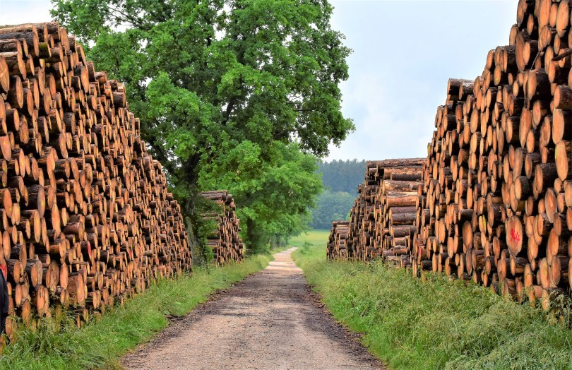 stacks of timber on both sides of a country lane