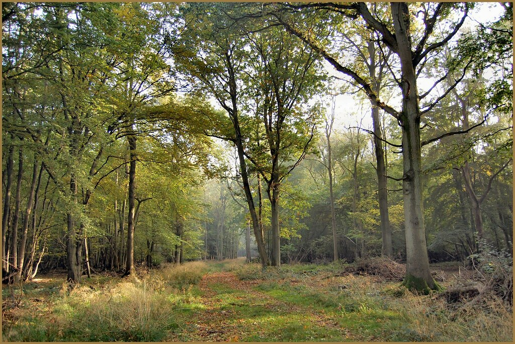 bridle path at Monks wood experimental station