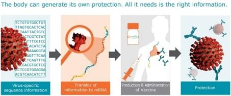 Processo de vacina Curevac Mrna