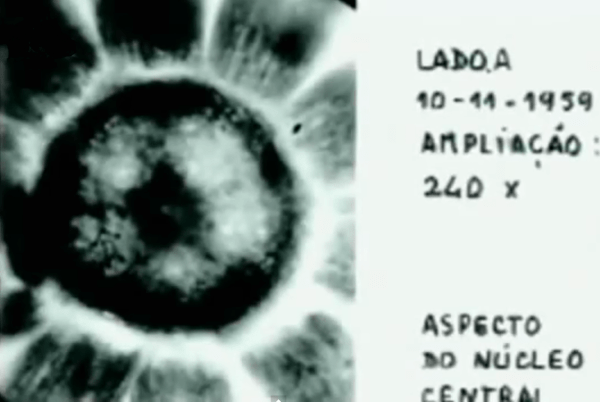 living extraterrestrial organism allegedly captured and studied in portugal 62 years ago
