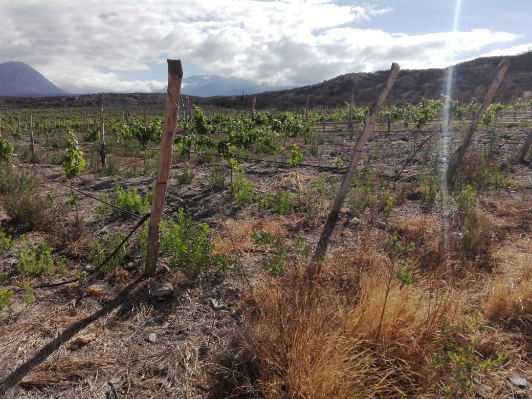 SALTA || COUNTRY DE VIÑAS - AYRES DE TOLOMBÓN