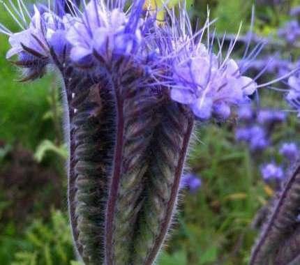 Biodiversity in Kerry