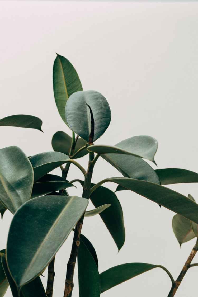 green leafed indoor plant