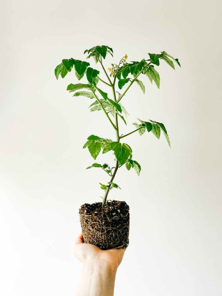 crop person holding pot with green plant in hand