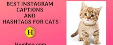 Best Instagram Captions and hashtags for Cats