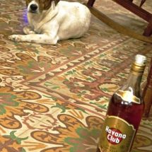 Dog & rum at Abel's barber shop (Trinidad)