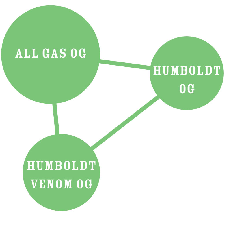 ALL GAS STRAIN GRAPH