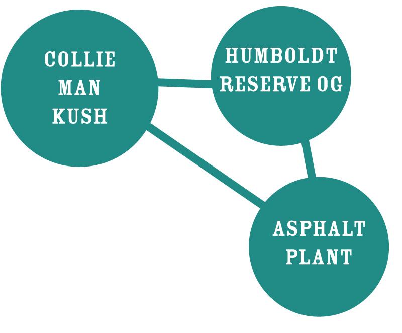 Slightly Stoopid Collie Man Kush Graph