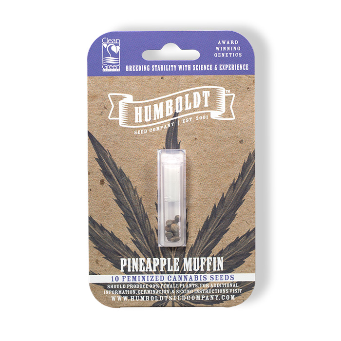Pineapple Muffin - the best seeds in humboldt