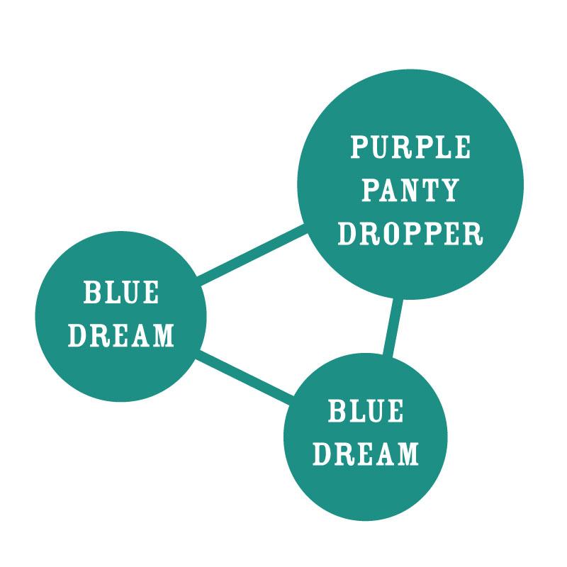 Humboldt Dream Strain Graph