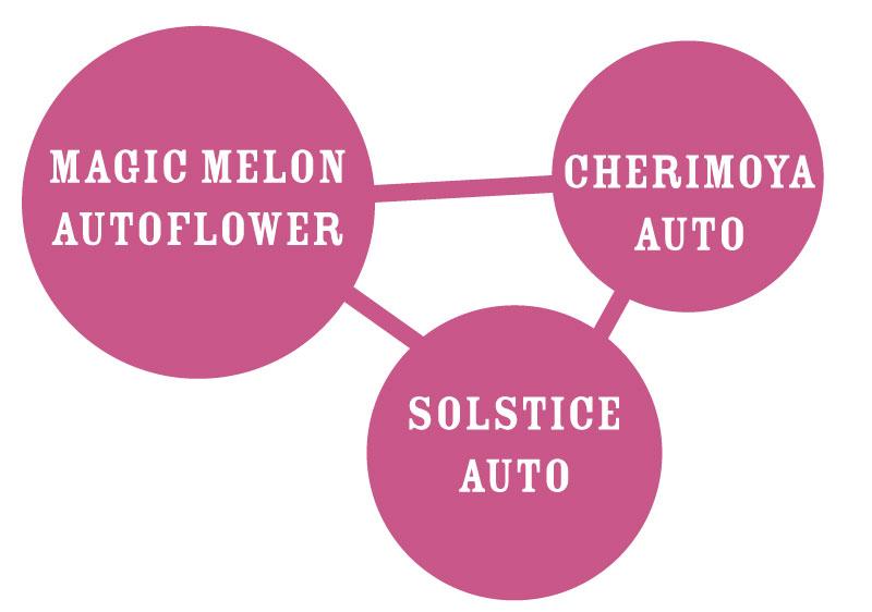 Magic Melon Autoflower Strain Graph