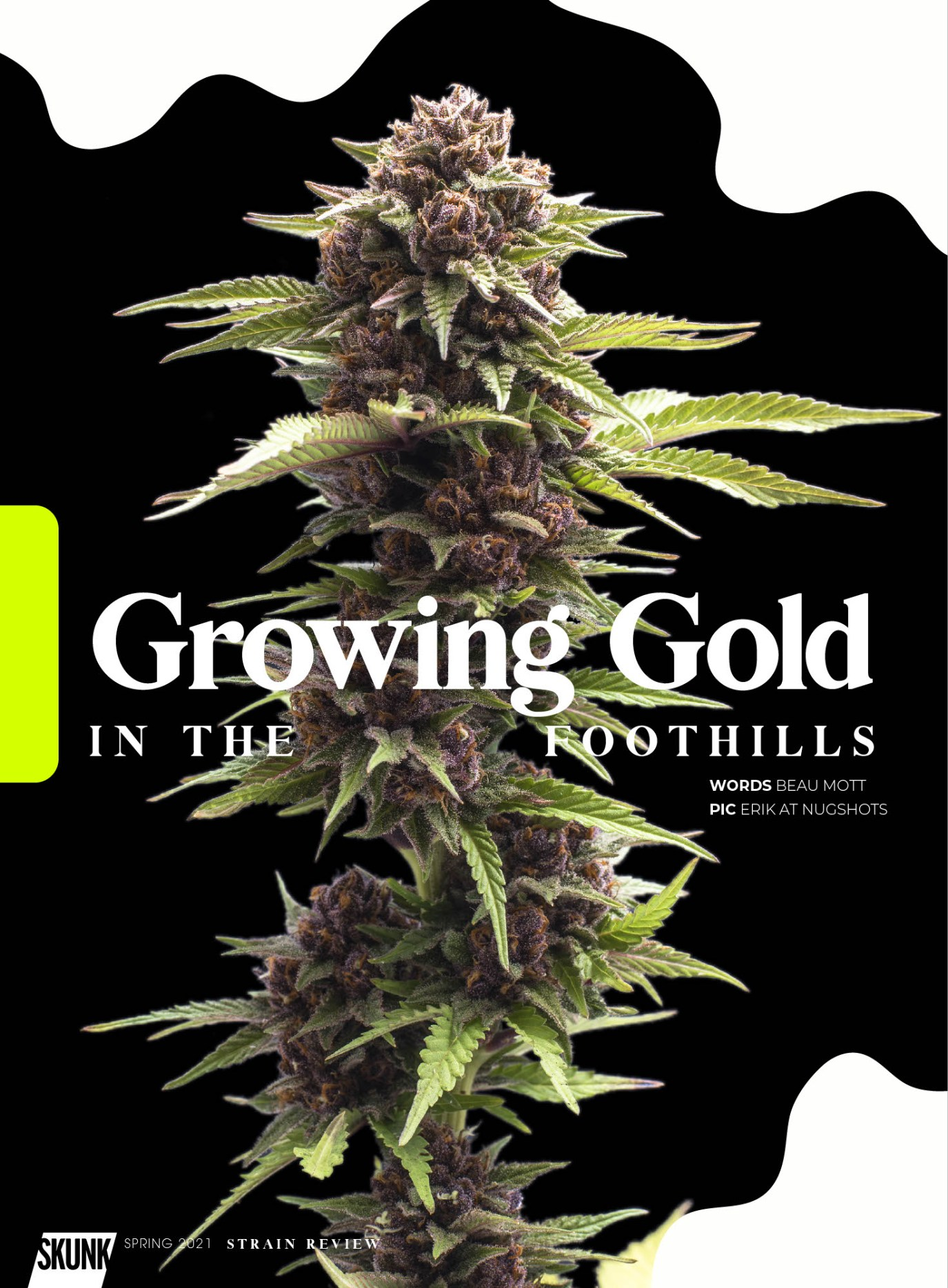 Growing Gold in the Foothills