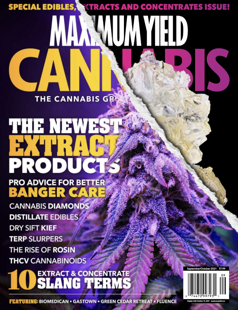 Maximum Yield Cannabis Feature