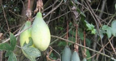 Frutas en los Humedales de Bogotá