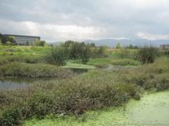 Humedal Capellanía costado occidental
