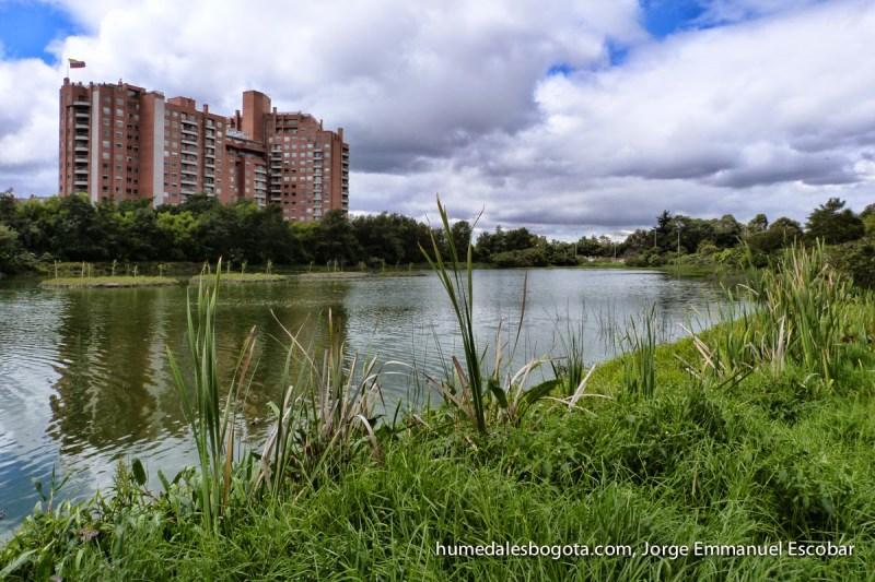 Plantas acuáticas en los Humedales de Bogotá