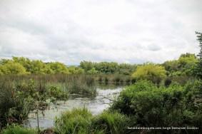 Reserva humedal La Conejera