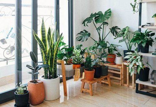 Image of when should I use a humidifier for my plants