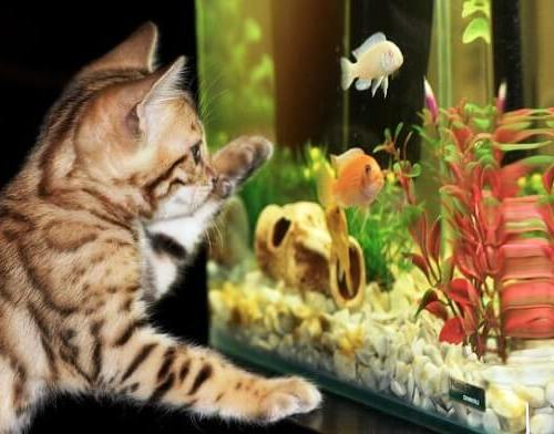 Image of does a fish tank act as a humidifier