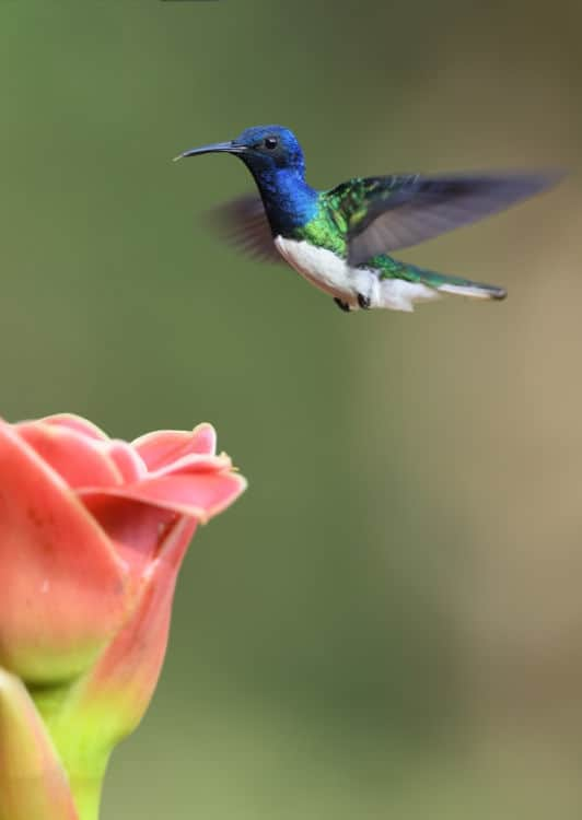 Why Choose Hummingbird Marketing Services for Website Design in Seattle