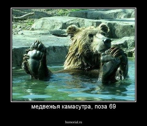медвежья камасутра, поза 69