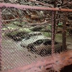 January 2014 Bronx Cars and Trees