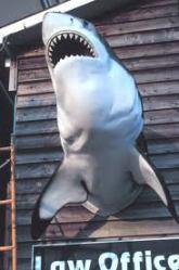 SharkLawyer