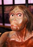 Nellie the Neanderthal.  She got around.