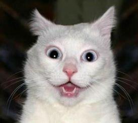 funny-drivers-license-dumb-ugly-derp-cat-pics