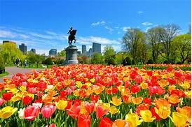 Image result for boston public garden