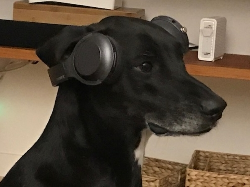Spotify for Dogs