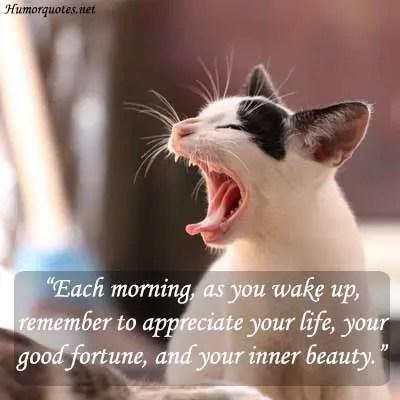 beauty humorous quotes
