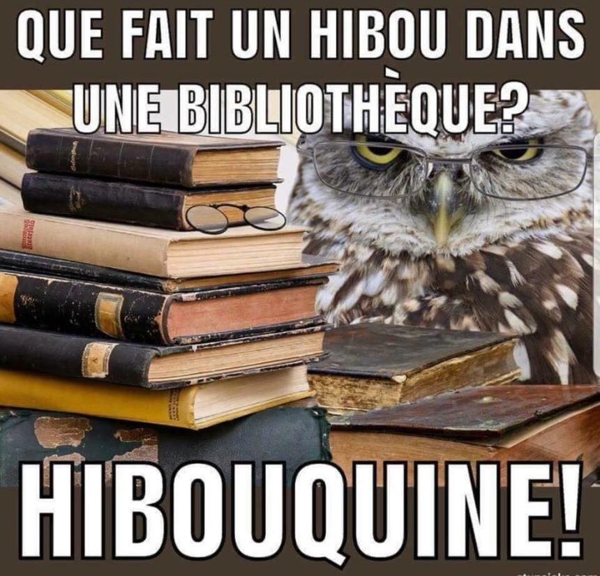 Que fait un hibou dans une bibliothèque