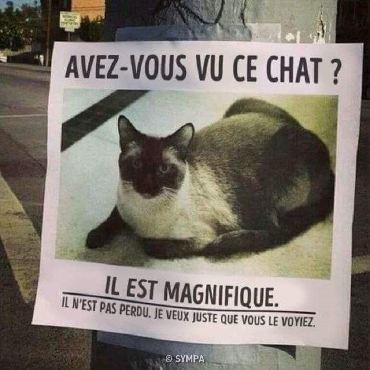 Avez-vous vu ce chat