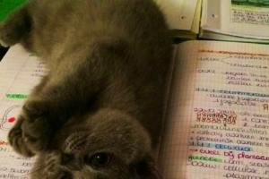Non, tu n'étudie pas. Tu joues avec moi !