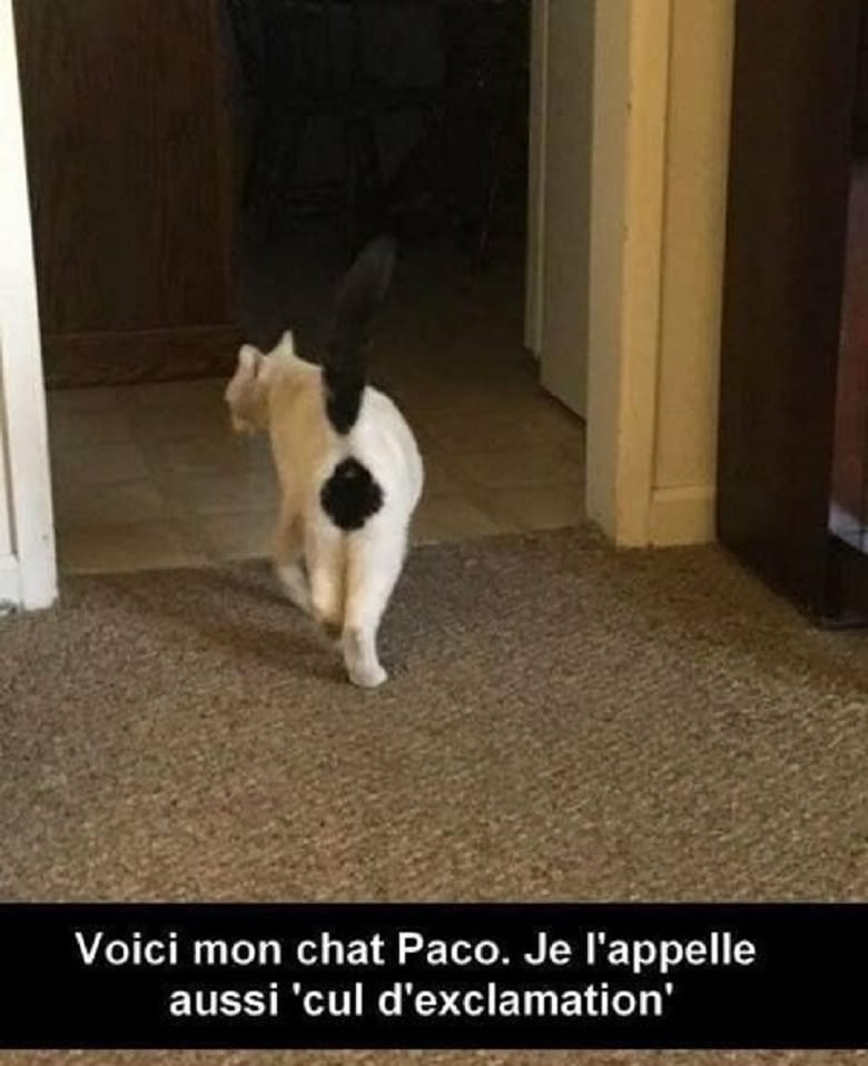 Voici mon chat Paco