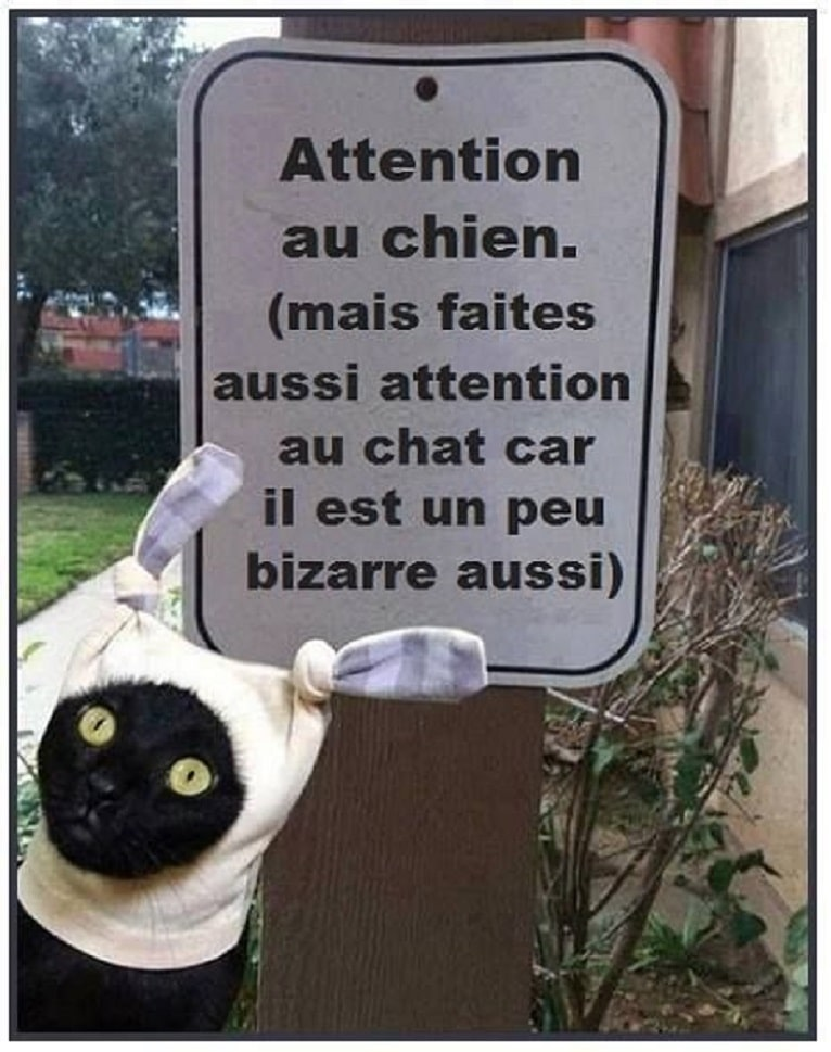 Attention au chien.