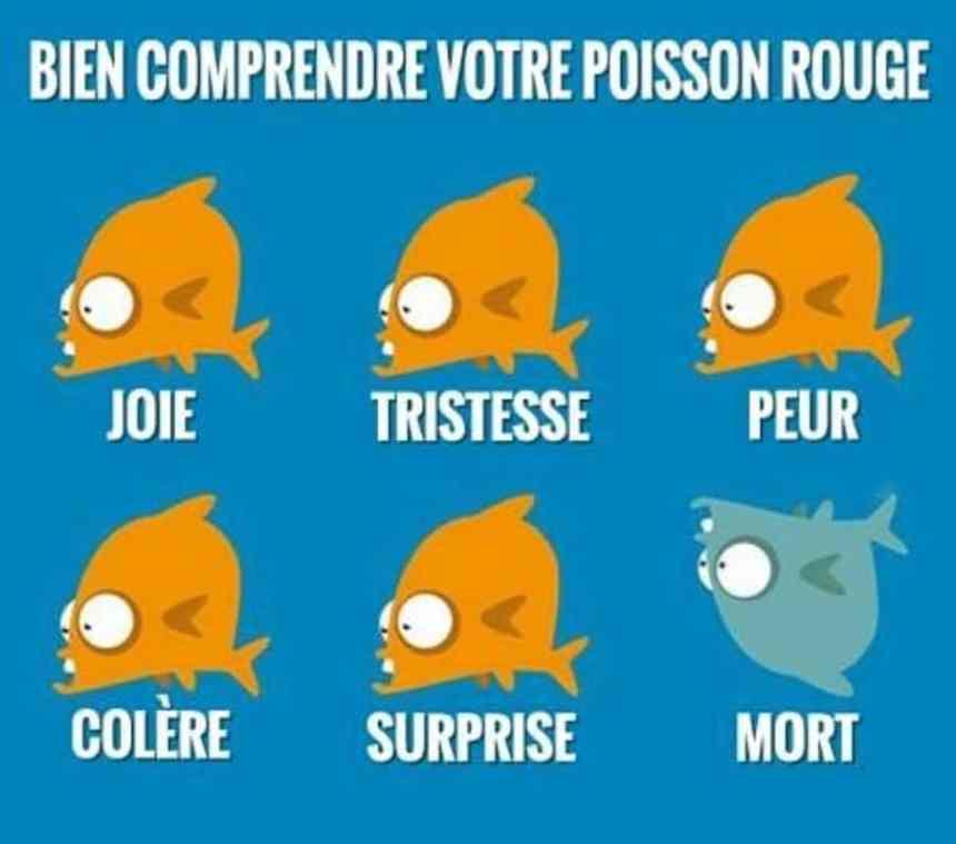 Bien comprendre votre poisson rouge
