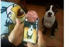 Comment prendre une image parfaite de son chien