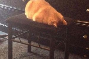 Il semblerait que mon chat fasse une dépression