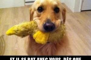 Il vous supplie de lui lancer son jouet