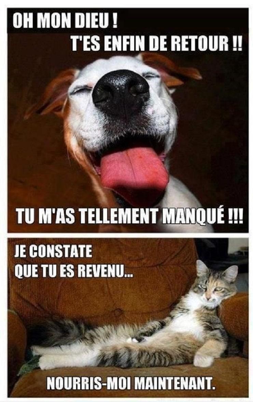 La différence entre chiens et chats quand on rentre à la maison